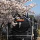 JR松任駅(静態保存)D51と桜
