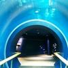 【琵琶湖博物館】関西で混雑しにくい博物館!~2018年第2期リニューアルの見どころ~