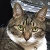 我家の猫は「らいおんハート」に出てくる薬箱