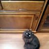 食器棚の整理(5) スパイスラックの置き場所を探す