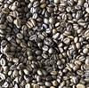 よく聞くアラビカ種って何?コーヒーの品種をちょびっと解説!