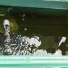 屋外らんちゅうの水換えと自作フィルターの掃除