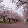万博公園 春の花 花言葉その4