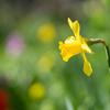 いろいろと庭の花