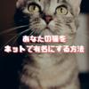 あなたの猫をインターネットで有名にする方法