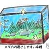 4.メダカを飼育しよう!プロから聞いた水質によるメダカへの影響