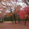 三太郎の小径 西公園紅葉