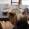 安曇野でワンコと本場韓国料理を楽しむ♡【羅山】