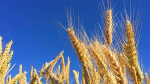 「高騰する」は英語でなんて言う?世界の食料価格を中国需要が押し上げ