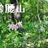 ヒメサユリ祭り「袴腰山」(ひめさゆりの小径)