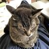 猫がブログを書かせてくれない問題