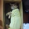 猫ハゲる ④  復活か!!