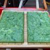 今回のミッションは鮮やかな野菜入り手漉き和紙を作ること