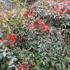 冬の「まつこの庭」