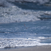 波を避ける