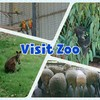 In Australia Part156 Zoo