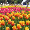 ガーデンネックレス横浜2021 開催!山下公園や港の見える丘公園など桜からチューリップへ