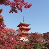 無料で楽しむ京都の紅葉(2020年11月18日)