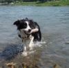 最近のこと 川遊びとかいろいろ・・
