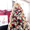 2019/11/8 テーマ水槽「デンキウナギでクリスマスツリー点灯!?」