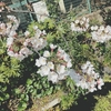 【下北沢】今週が見頃の穴場スポット。桜を満喫するなら代沢緑道に決まりお散歩完全ガイド版。