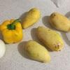 メキシコのマンゴーをドライマンゴーにした