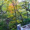 箱根~早川渓流沿いの紅葉風景🎵