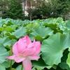 旧岩崎邸庭園と不忍池