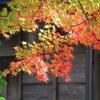 江戸東京たてもの園 紅葉とたてもののライトアップ