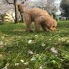 城北公園の桜の下で