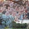 2018/3/24 8年連続8回目の開会式