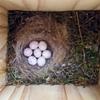 ワークショップで作った〈巣箱〉に小鳥が入った!/ことしの東北被災地巡礼を前にウレシイ知らせ