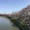 【お花見】最高のお花見場所、埼玉県にある北越谷元荒川堤のススメ