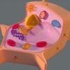【水素セラピスト検定】ヘルスケア編 『細胞の基礎 Part.1』
