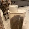 【猫グルメ】1歳アメショKIRIMARU(♀)の食事事情