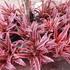 チャトゥチャック植物市場