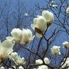4月12日生まれの運勢・誕生花言葉への想い