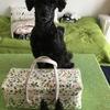 愛犬の問題行動を植物療法で癒す(第一回)