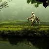 自然の中で生きる!自然で生きるための参考にしたいロールモデル