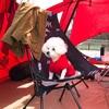 韓国の愛犬同伴キャンプ場がよい。
