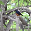 台北植物園の野鳥!