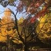 鹿沼公園の紅葉報告 (11月21日現在)
