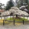 【京都】【御朱印】『大原野神社』に行ってきました。京都観光 京都旅行 国内旅行 御朱印集め 寺社巡り 京都桜