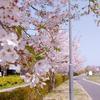 自律神経乱れまくりの春を乗り切るために!