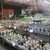 グリーンプラザ山長 本店の苗売り場には屋根があります♪
