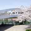 今年の桜 その3(飛翔橋)