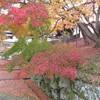知恩院へ紅葉を見に行く(京都)…過去20161201