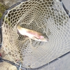 朽木渓流魚センター釣行 2月15日 第2回