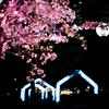奈良公園が青く染まる!しあわせ回廊なら瑠璃絵に行ってきた!