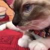 両国駅広小路で浮世絵の世界で猫と遊べる 江戸ねこ茶屋 へ行ってきました。